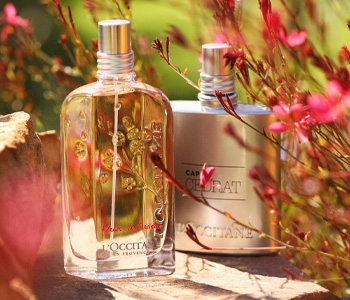 L'Occitane Fragrances