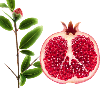 Klorane Pomegranate